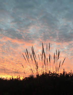 grass_solstice
